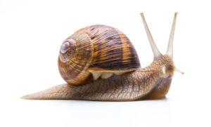 Tuning-PC-Tuning-Snail