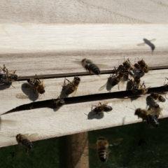 Ein eigenes Bienenvolk für ESM-Computer