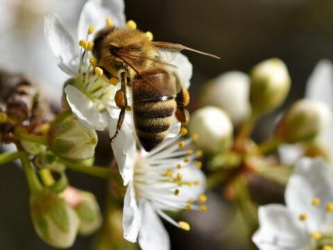 Ein neues Bienenvolk entsteht