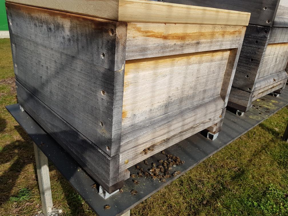 tote Bienen vor dem Stock