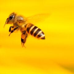 Frühlingserwachen bei den ESM-Bienen