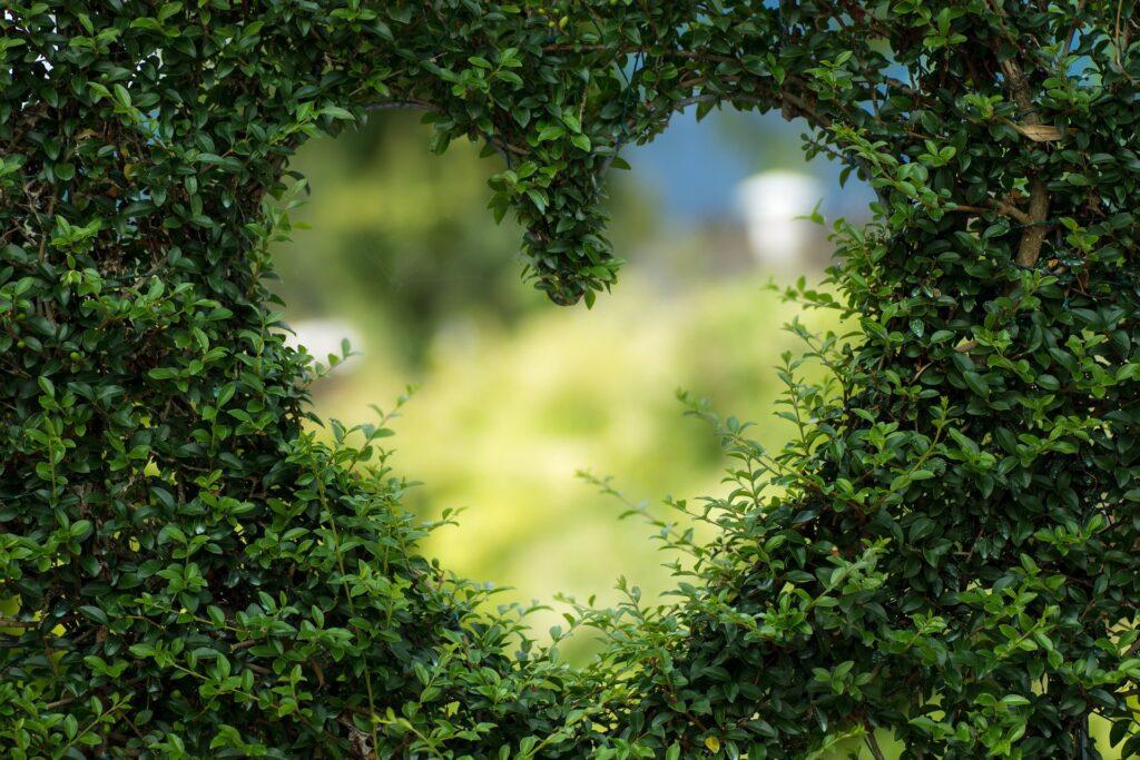 Herz in Buchsbaumhecke